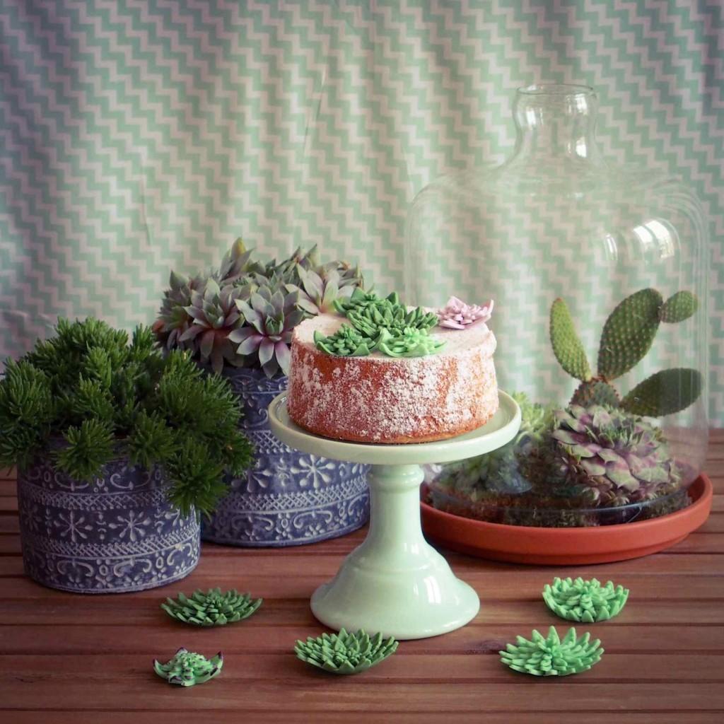 décoration plantes succulentes