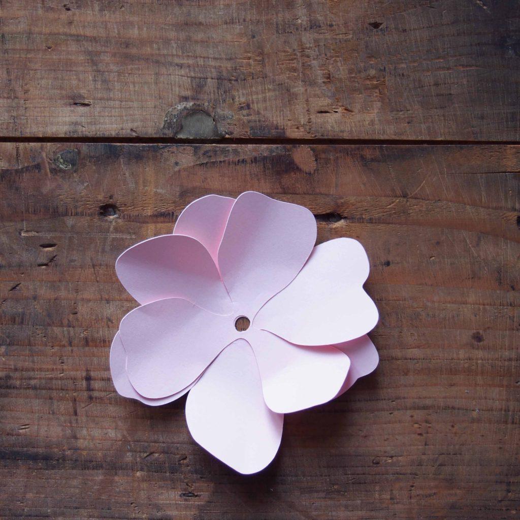 fleur anemone papier