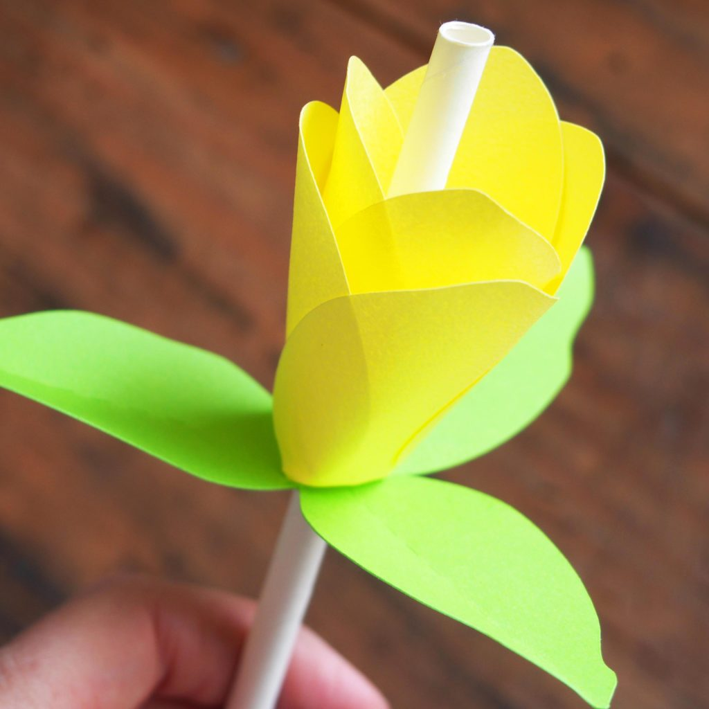 tulipe papier