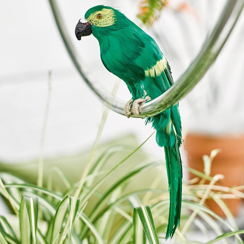 perroquet Deco jungle